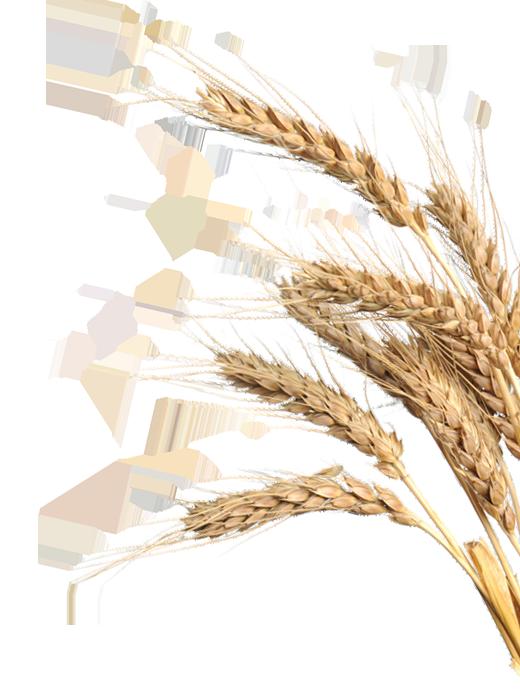 graan